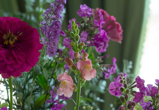 flower arrangement entrance snapdragon 9-05-16