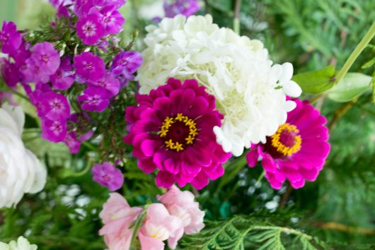 flower arrangement entrance zinnia 9-05-16