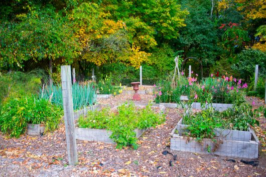 garden-tour-north-view-kitchen-garden-10-17-16