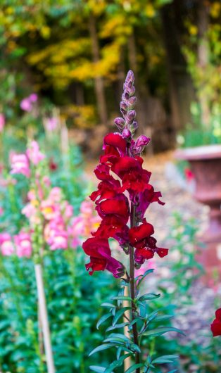 garden-tour-snaps-burgundy-10-17-16