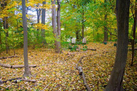 garden-tour-woodland-10-17-16