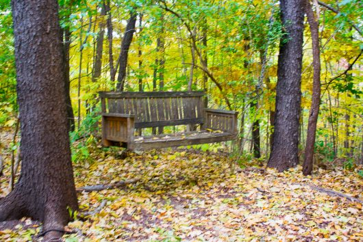 garden-tour-woodland-swing-10-17-16