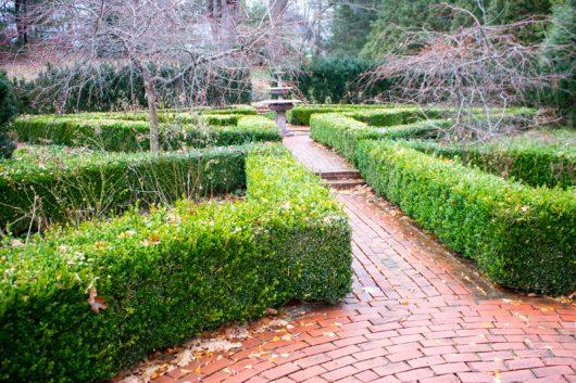 Mid-March Garden Tour