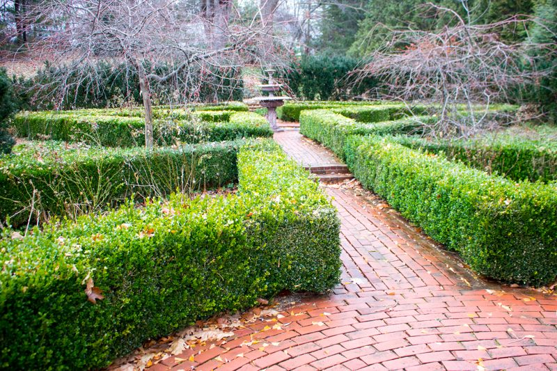 How to Thin a Boxwood Hedge
