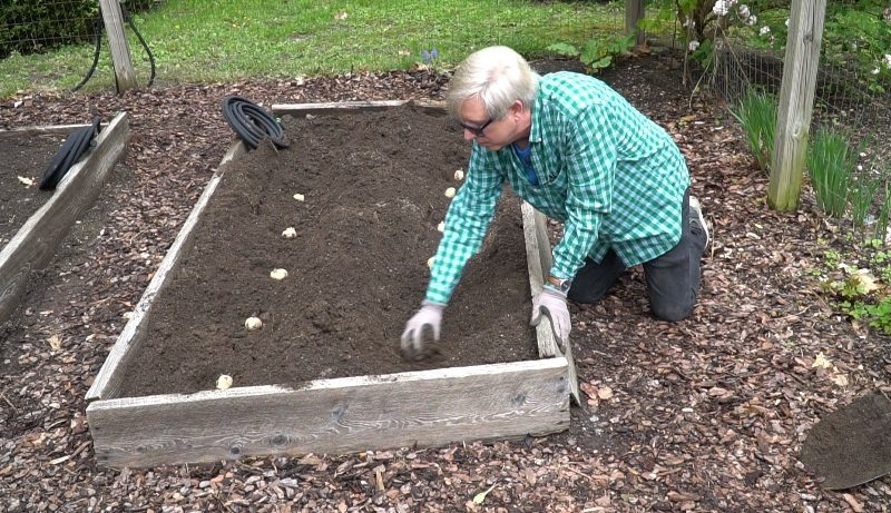 How I Plant Potatoes in a Raised Bed