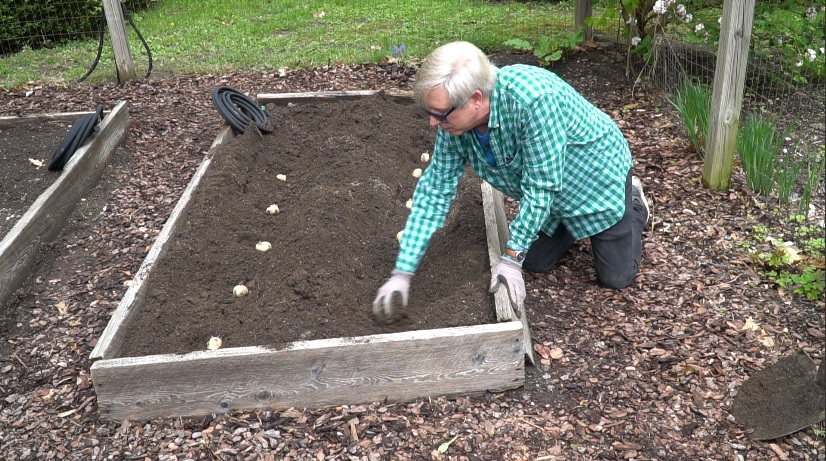 How I Plant Potatoes In A Raised Bed Kevin Lee Jacobs