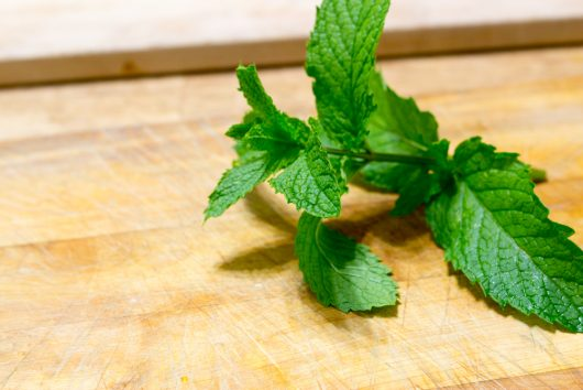 obtain a fresh sprig of mint