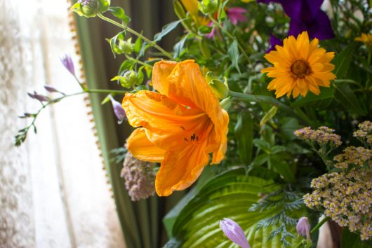 orange daylily in July Flower Arrangement