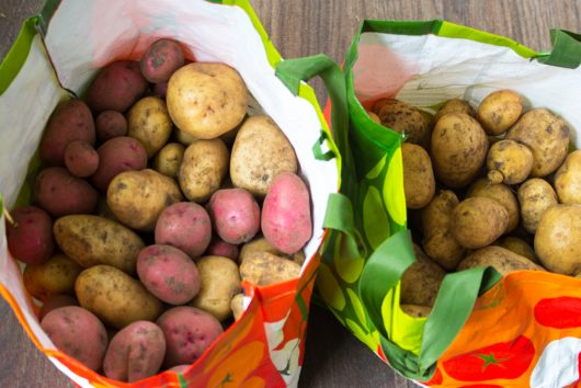 my best potato harvest
