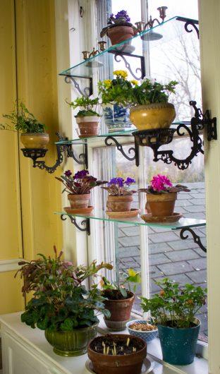 December Window Garden