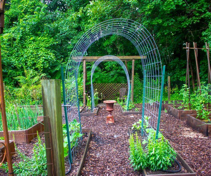 Your Veggie Garden Report: July 2021