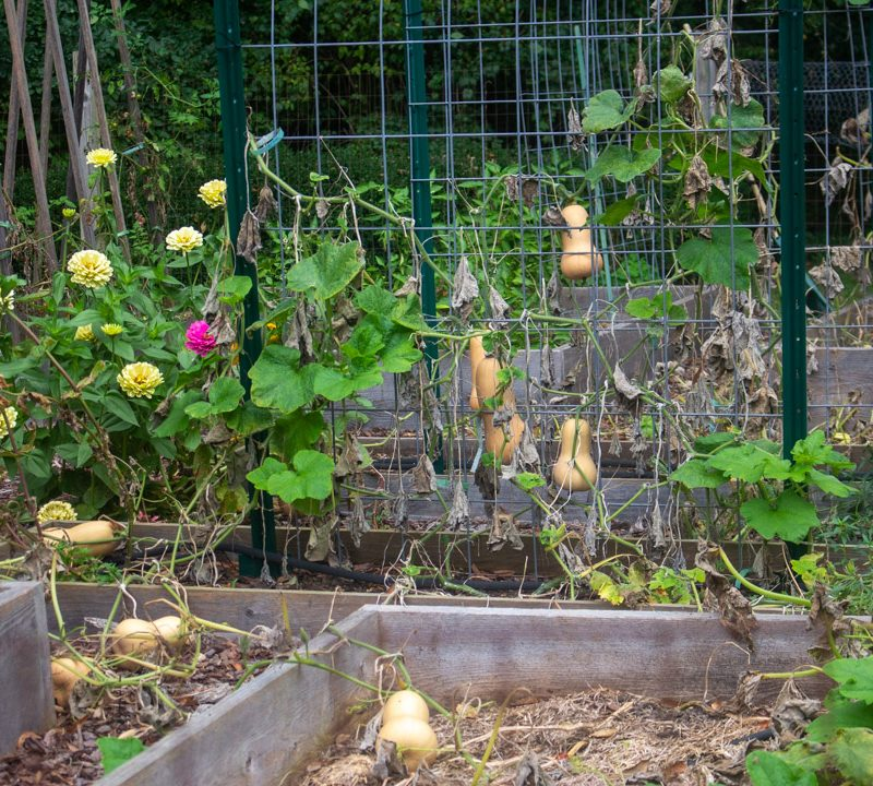 2021 Kitchen Garden Report (Yours and Mine)